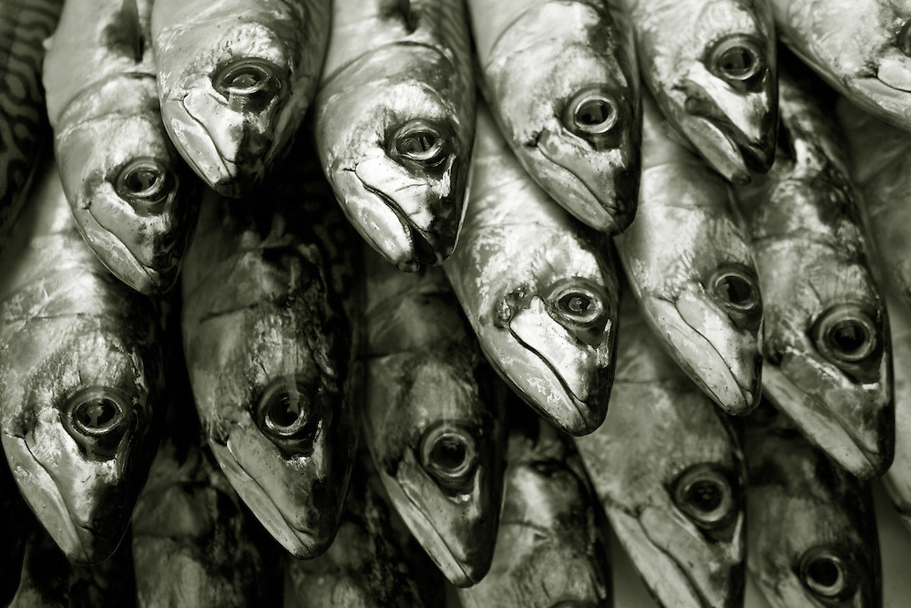 Fresh Mackerel, Cornwall