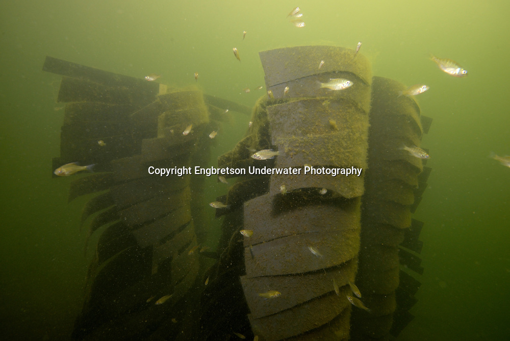 Fishiding Artificial Fish Structure<br /> <br /> Engbretson Underwater Photography