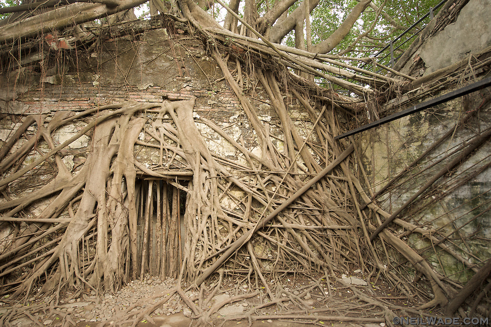 Anping Tree House is sort of the Angkor Wat of Taiwan.  Basically, a couple of big Banyan trees started growing through the walls and foundations of an old store house.  It's actually pretty cool, and much more interesting than the more famous Anping Fort just across the street.