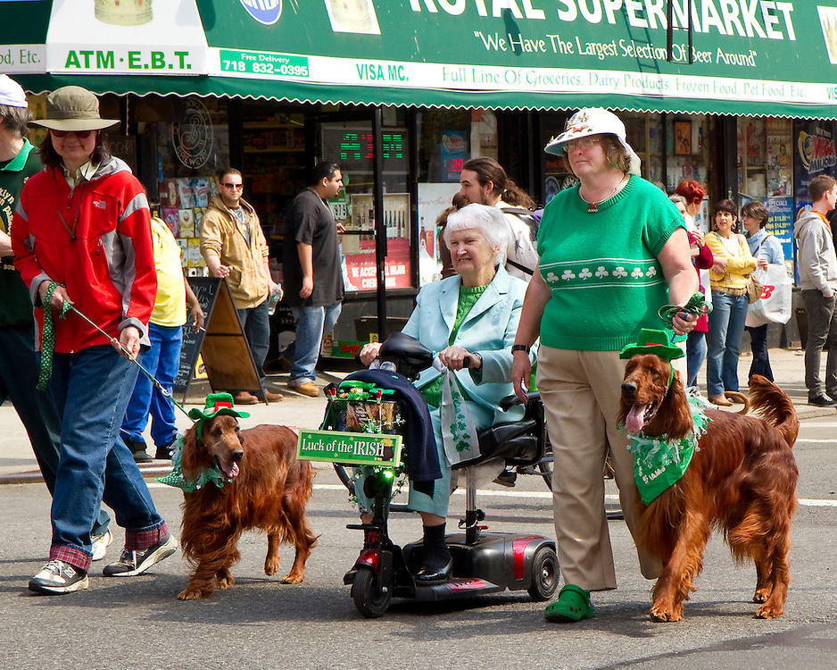 Irish setters at a local Brooklyn Saint Patrick's Day Parade.