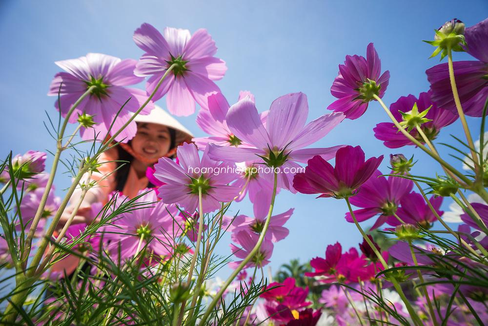Vietnam Images- Flower-Springtime- SaDec-Mekong Delta -Hoàng thế Nhiệm