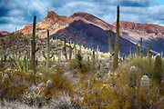 Beautiful and diverse desert landscape from The Superstitions, southern Arizona