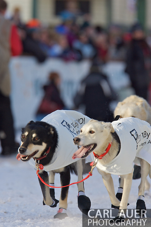March 7th, 2009:  Anchorage, Alaska - The team of Aaron Peck from Grande Prairie, Alberta, Canada start their way down 4th Avenue to start the 2009 Iditarod.