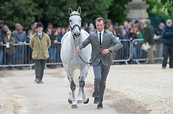 Dzenis Harry, (GBR), Xam<br /> First Horse Inspection - Mitsubishi Motors Badminton Horse Trials <br /> Badminton 2015