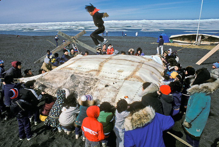 An Inupiat Eskimo boy goes airborne in a traditional blanket toss at the edge of the Arctic Ocean in Barrow, Alaska.
