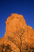 Silhouetted tree and sandstone fin lit by early morning light, Garden of the Gods Park, Colorado Springs, Colorado