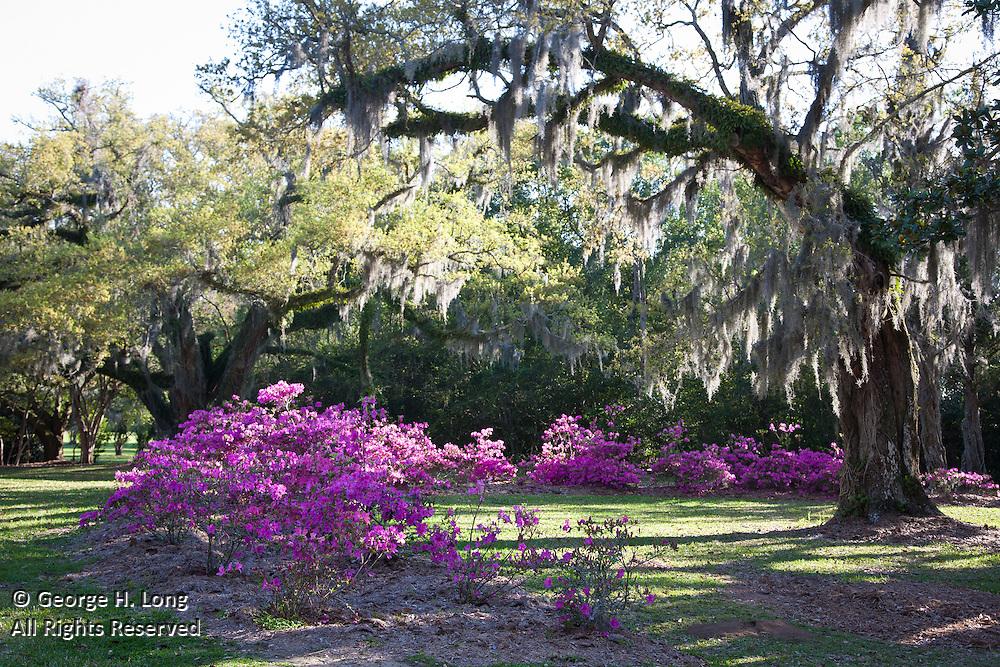 Avery Island Jungle Gardens; Sarah Hoffpauir, Aaron & Anna Sanders, George Long