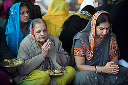 "© under license to London News pictures.  06/11/2010.Women praying during Celebrations for Diwali, the Hindu new year, at Gokul Centre for Cow Protection and Working Oxen in Aldenham near Watford, Hertfordshire today (Sat). The centre, which was originally donated by George Harrison, is unique in the western world producing ""Ahimsa Milk"" at a cost of £3 per litre without harm to any living being. The Centre is part of Bhaktivedanta Manor, a Hindu place of worship."