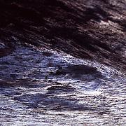 Worn and marked driftwood on Isla Iguana, Panama
