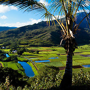 Hanalei River Valley