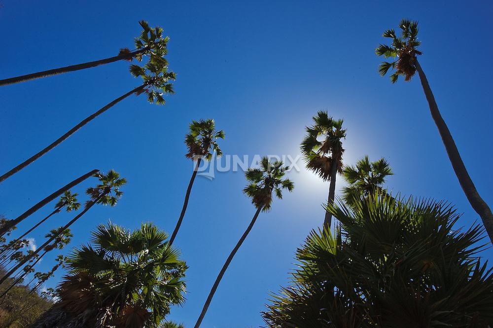 Lontar palms speckle the primeval landscape of Komodo National Park.
