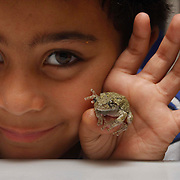 07/09/2015,MA: George Iker Richardson, 6, proudly shows a Grey Treefrong at his home in Bradford-Haverhill <br />