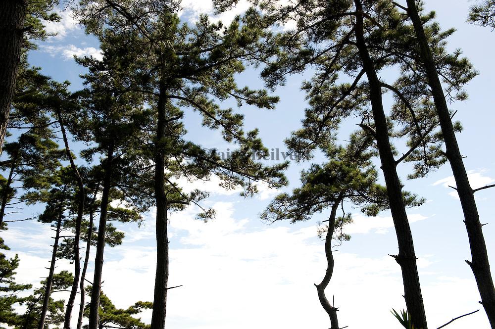 Trees, Tojimbo, Japan