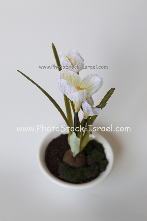 White Tulip Silk flower on white background