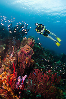 A female diver explores a coral reef, St. Lucia.