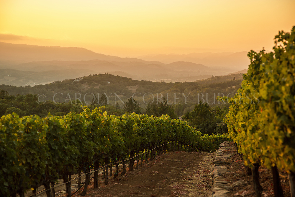Sonoma vineyard terrace at sunset