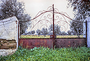 Rusted gate leading into olive grove in Portugal.
