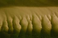 De drooggevallen Waddenzee bij eb.