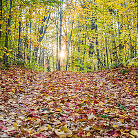 A colorful carpet of leaves cover an old road in the fall. <br />