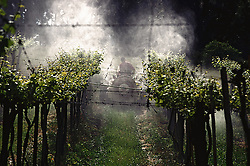 Bento Goncalves, RS, Brasil. 2002.Agricultor pulverizando videiras com agroquimicos./ Rural worker spraying fertilizers on the Vineyard..Foto Adri Felden/Argosfoto