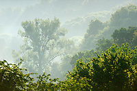 Morning Mist and Trees, Mullerthal trail, Mullerthal, Luxembourg