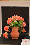 MOUNT LAUREL, NJ - JULY 26:  A miniature rose on display during the 2014 National Miniature Rose Show, hosted by the West Jersey Rose Society at the Hotel ML  July 26, 2014 in Mount Laurel, New Jersey. (Photo by William Thomas Cain/Cain Images)