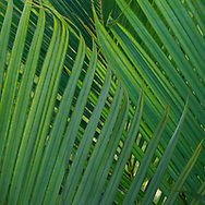 I shot this series of palms on an unpaved road that ran along the property we stayed at in Kauai.
