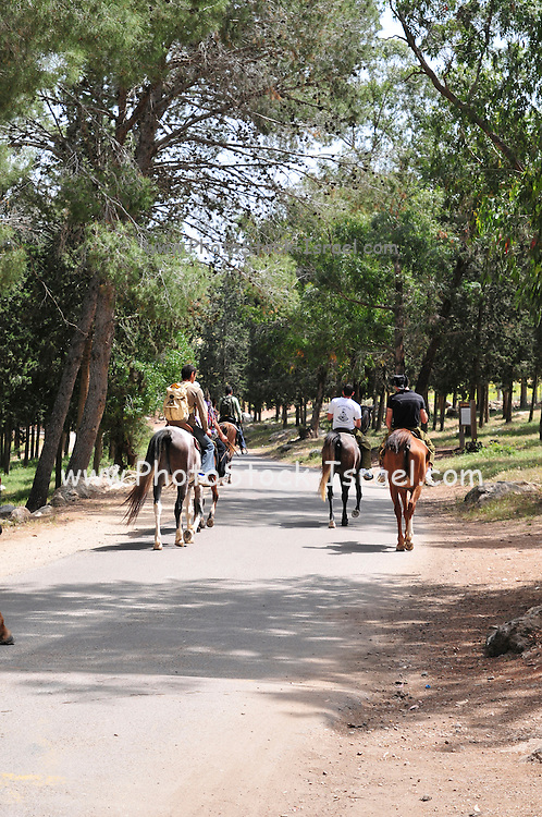 Israel, Carmel Mountain's pine tree Forest, Horseback riding