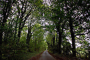 Country road through woodland, Gloucestershire, United Kingdom