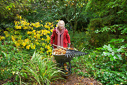 Carol Klein pushing wheelbarrow full of leaves in the woodland garden at Glebe Cottage