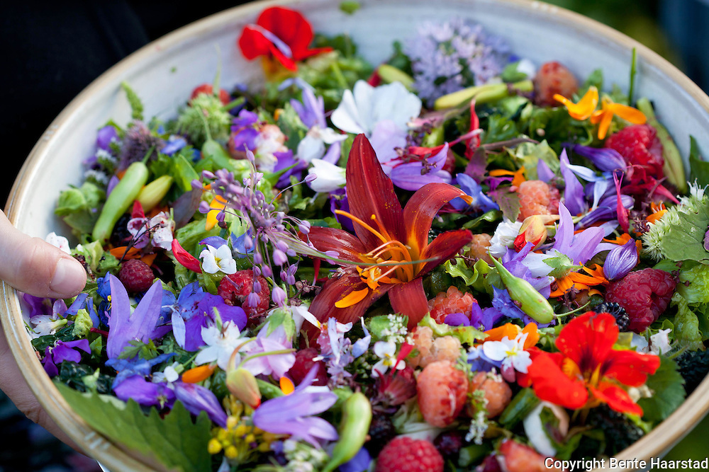 Mixed salad with flowers from late summer.