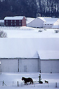 Amish farm team in snow, landscape, Lancaster Co. PA