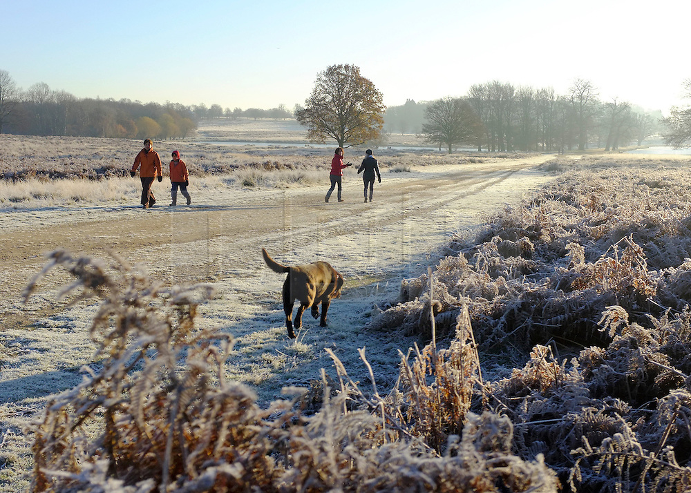 © Licensed to London News Pictures. 02/12/2012. Richmond, UK Walkers and dogs walk through the heavy frost. Deer, joggers and dog walkers wake up to a golden frosty morning in Richmond Park, Surrey, today 2nd December 2012. Photo credit : Stephen Simpson/LNP