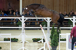 095, Chapeau <br /> BWP Hengsten keuring Koningshooikt 2015<br /> © Hippo Foto - Dirk Caremans<br /> 23/01/16