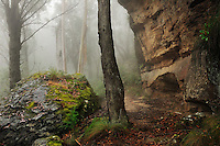 Richard Furhoff 110102_BlueMountain_DSC2533_NX.tif .Cave, Blue Mountains National Park, NSW, Australia...