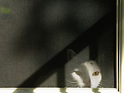 White cat at door screen