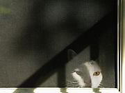 White cat at door screen