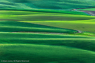 Elevated view of undulating wheat crop, Palouse region of eastern Washington.