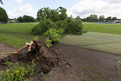 © licensed to London News Pictures. London, UK 17/06/2012. The fallen tree injured three boys all, aged nine, at Spencer Cricket Ground in Earlsfield, south-west London. Photo credit: Tolga Akmen/LNP