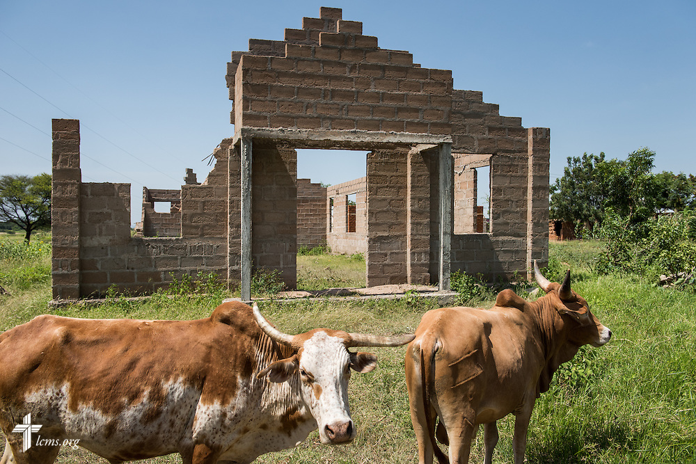 Animals graze adjacent to a Lutheran church under construction in Usanda, Tanzania, on Saturday, March 14, 2015. LCMS Communications/Erik M. Lunsford