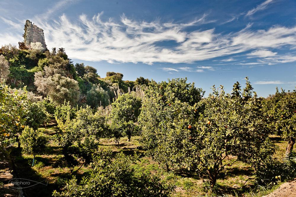 Agrigento, Valle dei Templi. Agrumeto del Giardino della Kolymbetra. Proprietà FAI. ©2012 Vince Cammarata   FOS