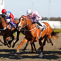 Paloma's Prince and Matthew Davies winning the 4.00 race