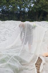 Robert harvesting brassicas under enviromesh