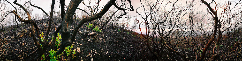 The remain of trees and bushes after some of the most devastating fires in portuguese history, Portugal.