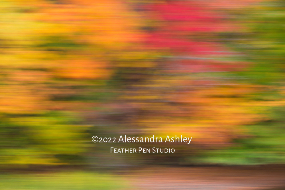 Impressionistic long exposure abstract highlighting the varied hues of autumn foliage along the banks of the Clear Fork Reservoir.