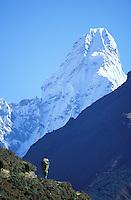 Nepal - Region du Solu-Khumbu - Zone de l'Everest - Porteur sur fond de la montagne Ama Dablam