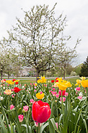 Hamptonburgh, New York - Flowers and trees are blooming at the Orange County Arboretum​ at Thomas Bull Memorial Park in Hamptonburgh.
