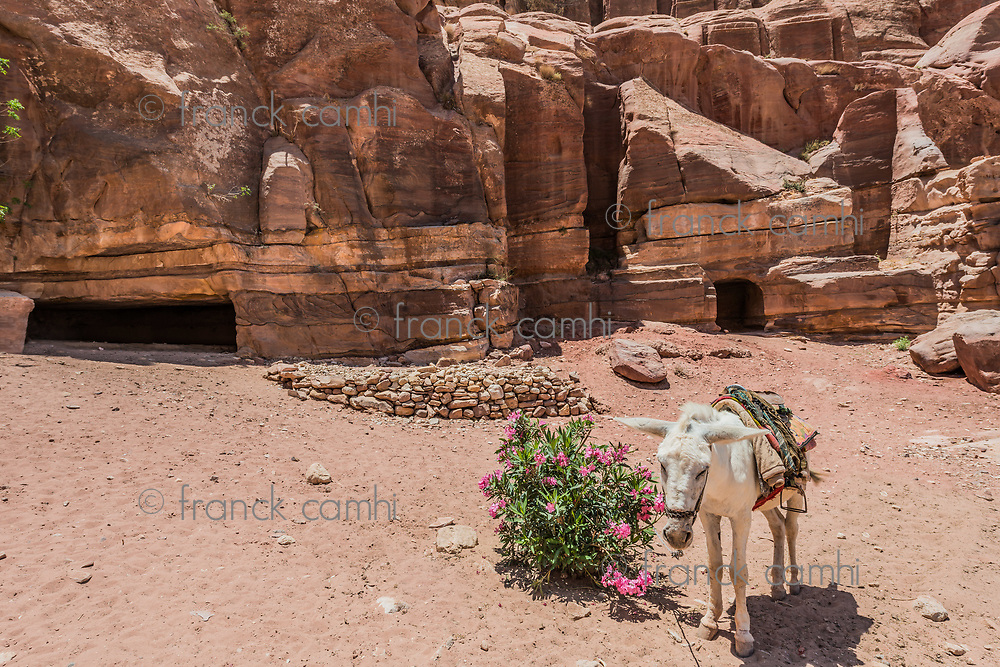 donkey in Nabatean Petra Jordan middle east