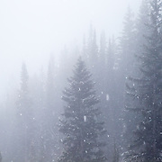 Trees through the whiteout mist of a winter storm at JHMR.