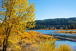 """""""Aspens at Spooner Lake 2"""" - These aspens and sun were photographed in the fall at Spooner Lake, Nevada."""